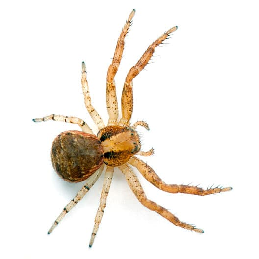 Crab Spider Control Oregon