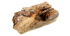 Pest Control Wood Fungi