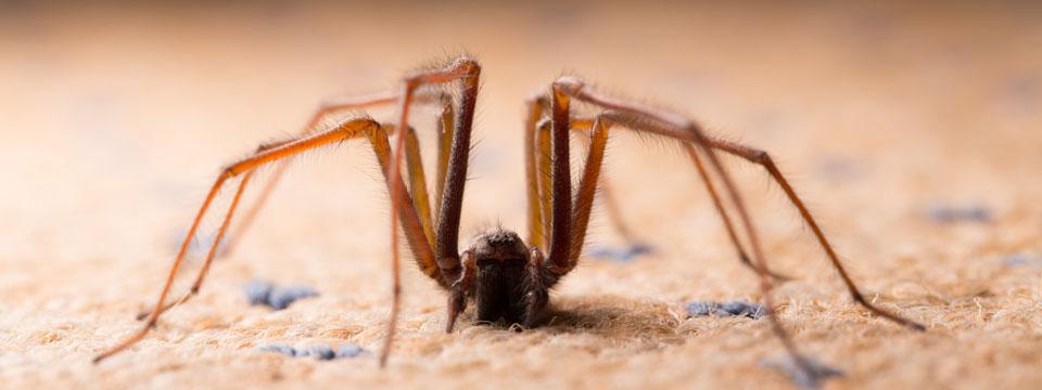 Hobo Spider Elimination in Oregon